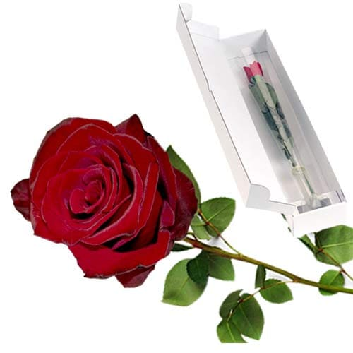Charming Selection of Long-stemmed Fairtrade Rose in a Box