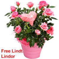 Sophisticated Presentation of Pink Roses in a Ceramic Pot<br>