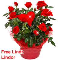 Sensational Selection of Red Roses in a Ceramic Pot<br>