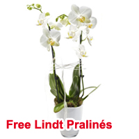Beautiful Memorable Moments Orchid Plant<br>