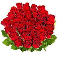 35 Fresh Red Roses